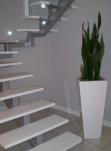 White vase lacquered h 90 with sanseveria Zeylanica-Installation h 190
